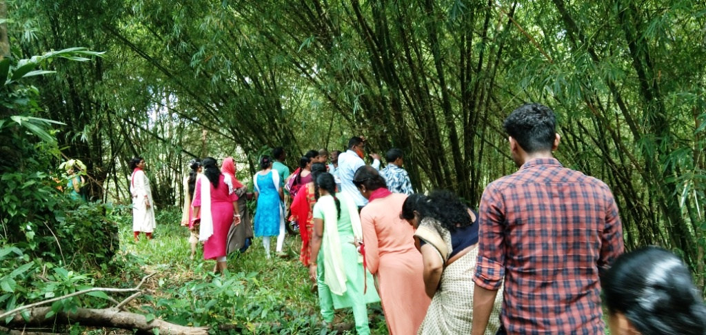 Visiting to natural bamboo forest