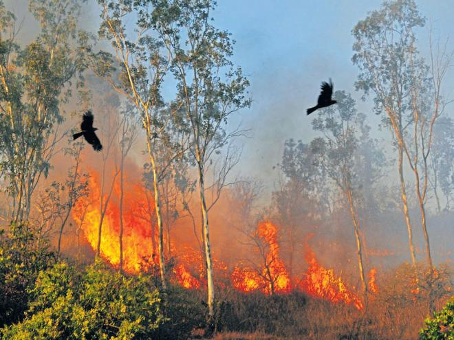 forest fire destroys more than 57 000 sq km of india u0026 39 s