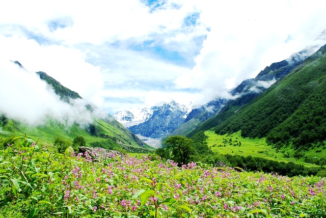 http://www.cpreecenvis.nic.in/WriteReadData/UserFiles/image/UNESCO%20World%20heritage%20sites/valley-of-flowers.jpg